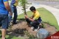Comemoração do Dia da Árvore